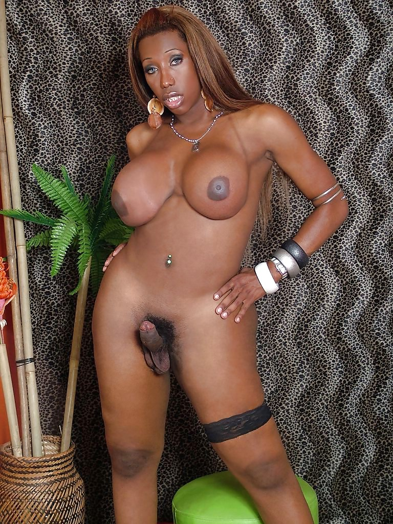 Tranny stock photos, editorial images and stock pictures
