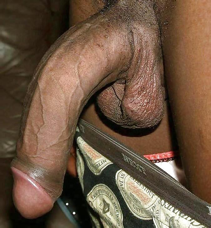 Gallery dicks porn, butt liccking vids